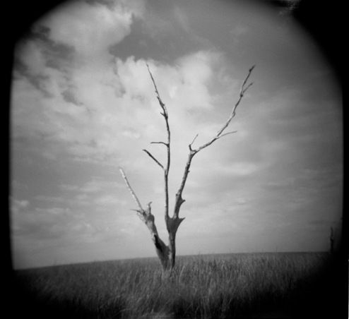 Tree  in marsh, Grand Isle